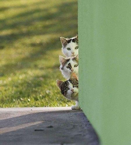 Andria Nur Wahyu Kucing 1