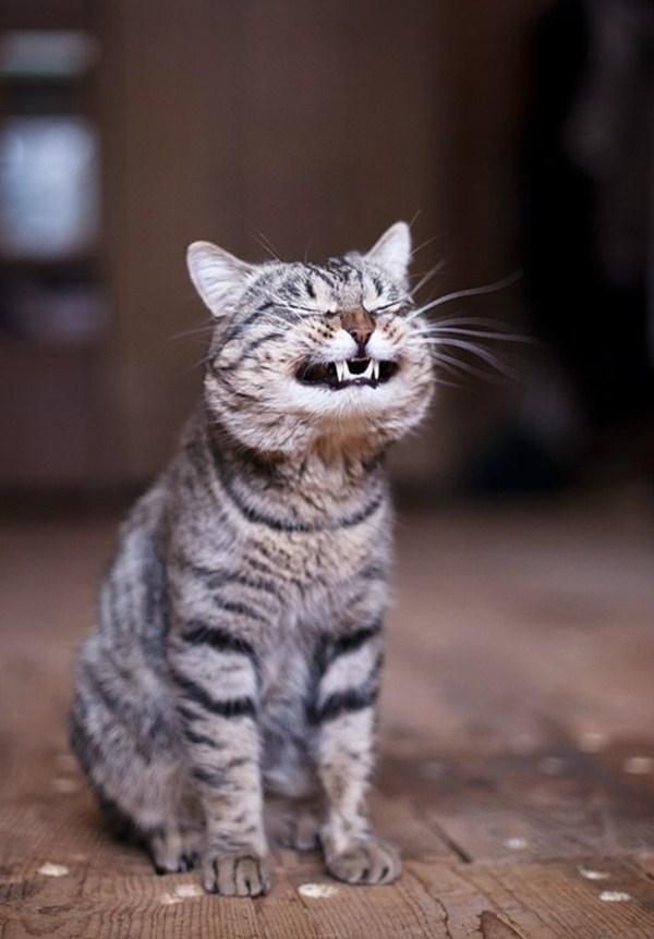 Andria Nur Wahyu Kucing 10