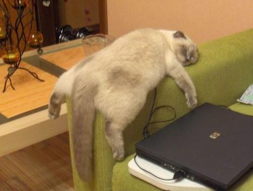 Andria Nur Wahyu Kucing 12