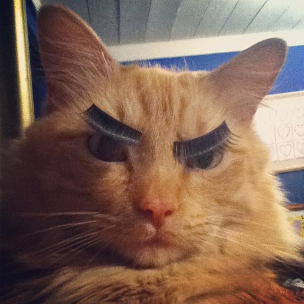 Andria Nur Wahyu Kucing 13
