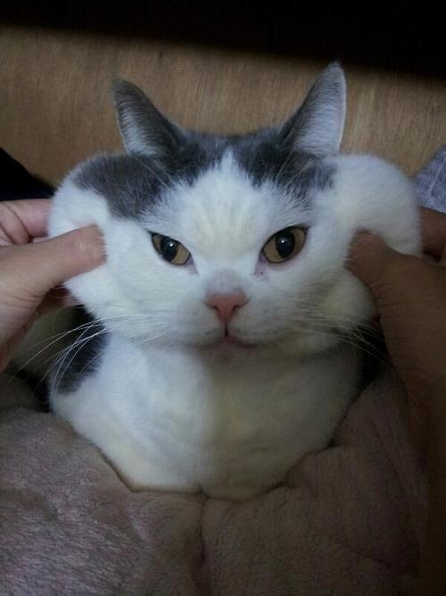 Andria Nur Wahyu Kucing 14