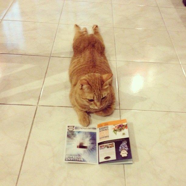 Andria Nur Wahyu Kucing 3
