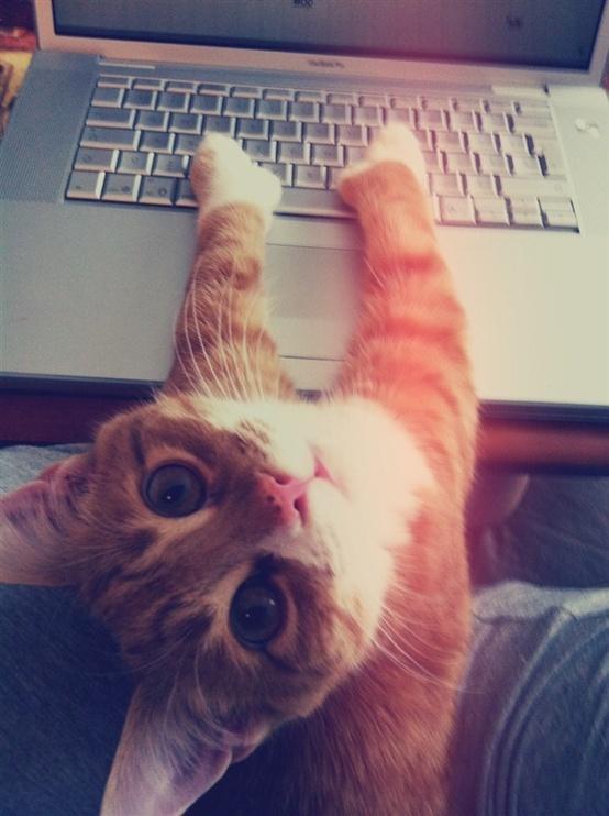 Andria Nur Wahyu Kucing 7