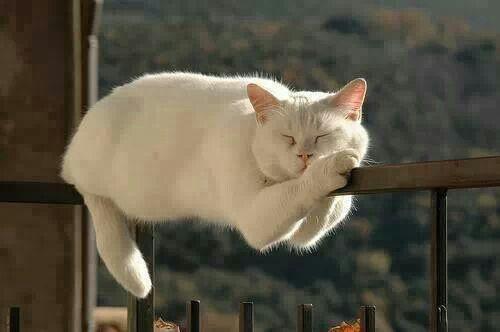 Andria Nur Wahyu Kucing 8