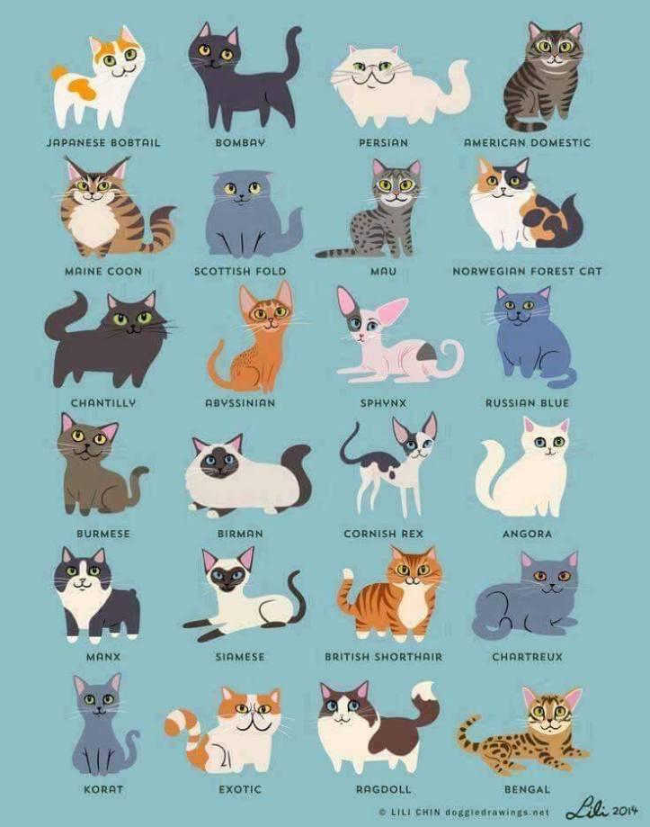 Jenis - jenis ras kucing (by Google)