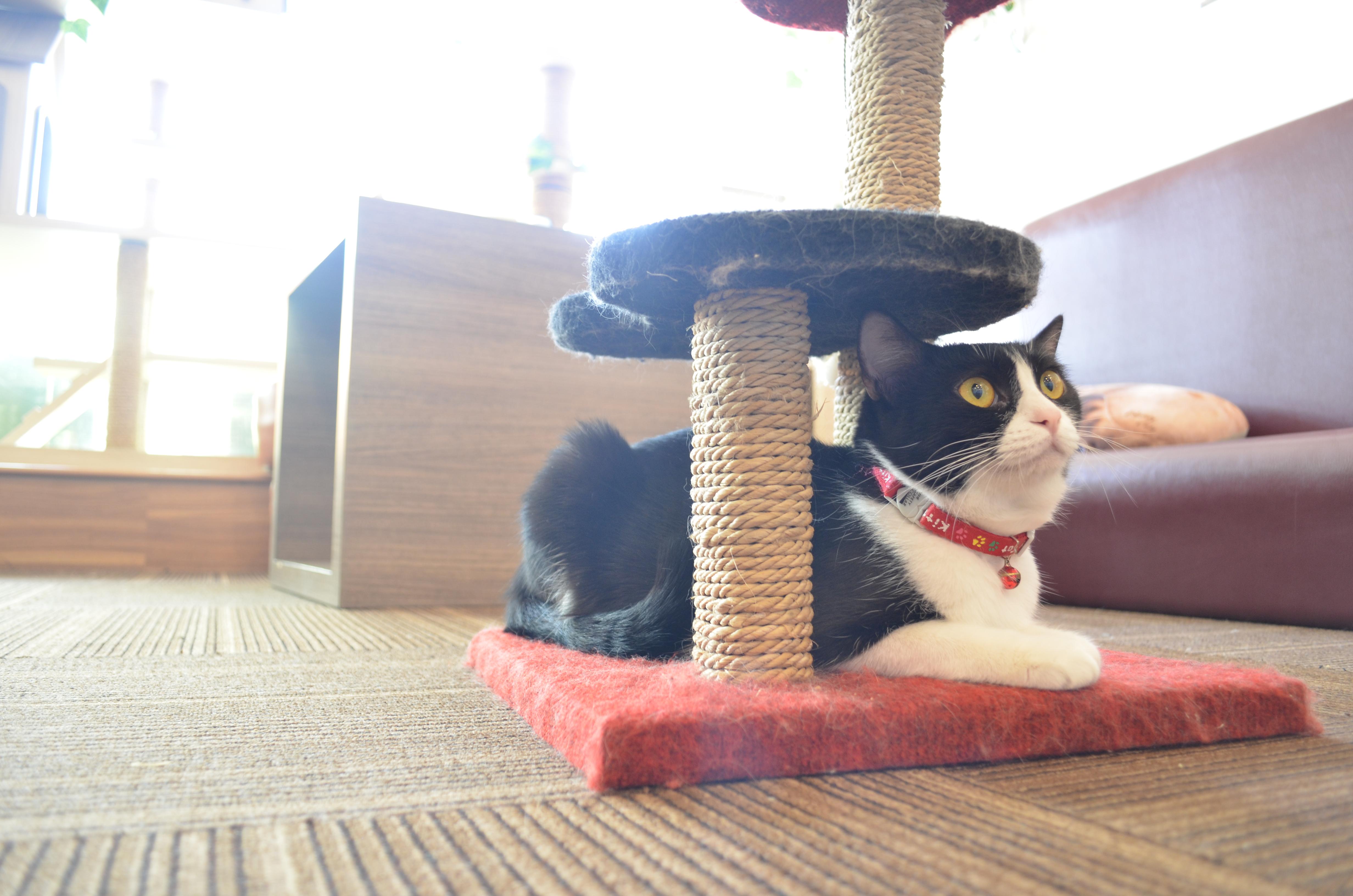 Cutie Cats Cafe Surganya Para Pecinta Kucing 011