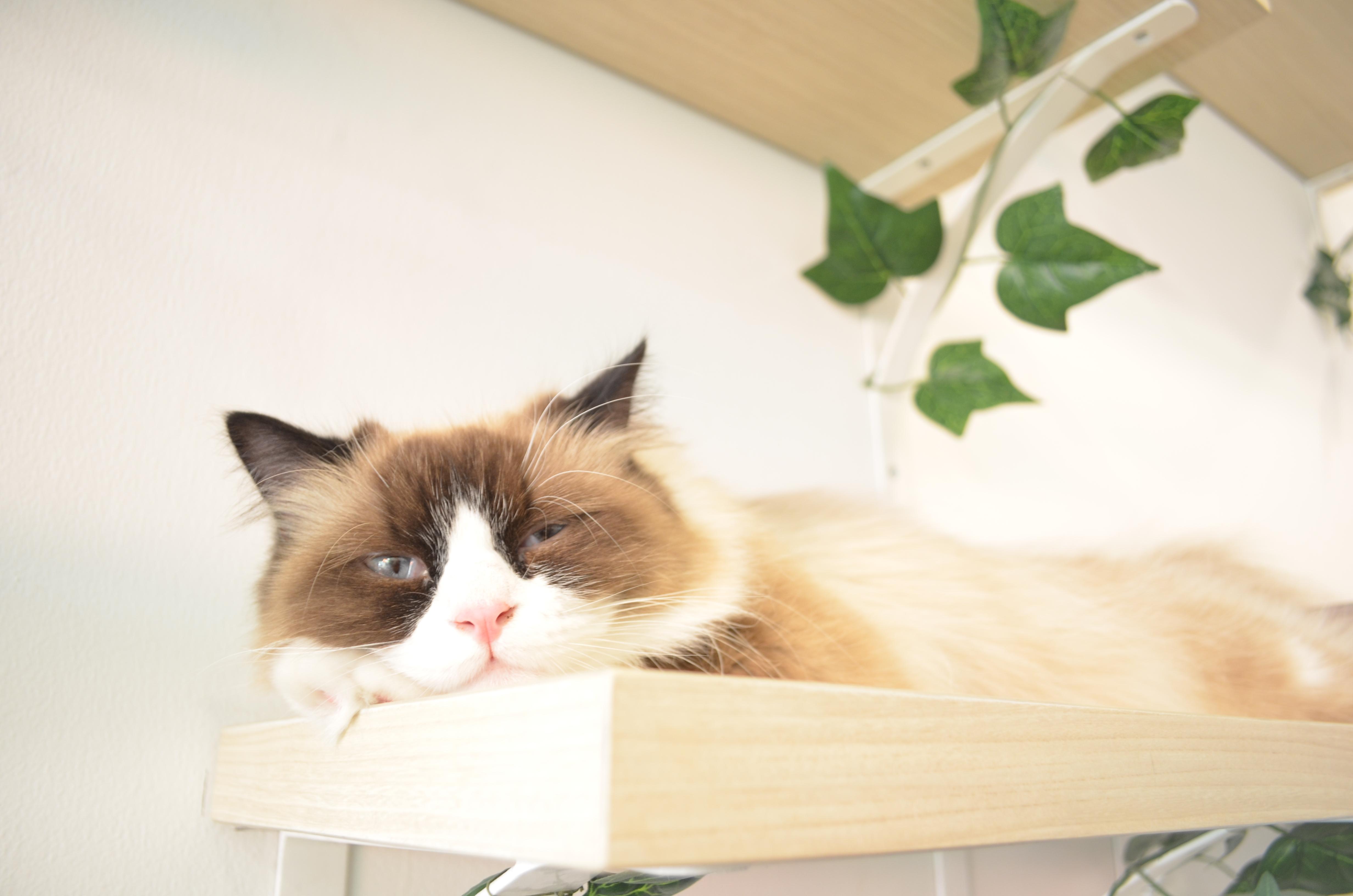 Cutie Cats Cafe Surganya Para Pecinta Kucing 03