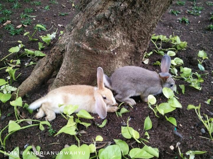 momo-and-mimi-kelinci-5-bulan.jpeg.jpeg